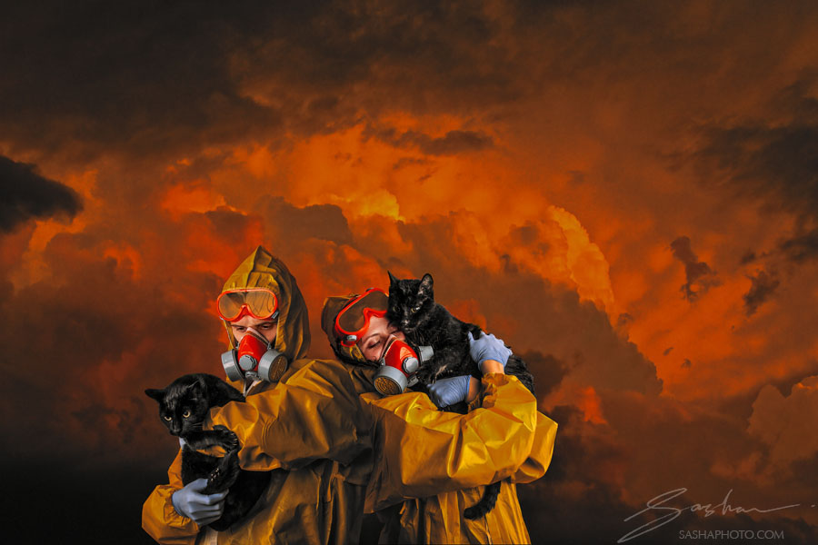 apocalypse with cats