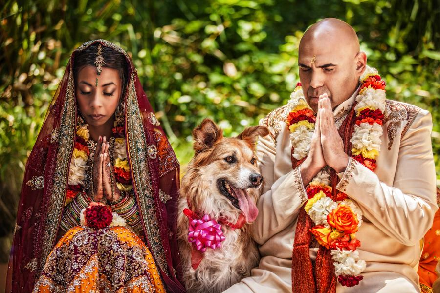 indian wedding bride groom dog